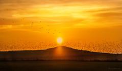 Cayendo el Sol, el viaje continua (Heranv) Tags: atardecer laguna pitillas bandada