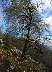 Winterspaziergang Mörschieder Burr (AndreasHerbert) Tags: mörschied mörschiederburr nationalparkhunsrückhochwald