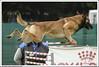 First Von King Von Backdraft RINALDI V  -0807 (Fab Photos Canine et Sportive) Tags: king von first backdraft