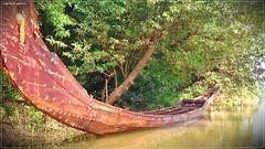 DSC_0117 (|| Nellickal Palliyodam ||) Tags: india race boat snake kerala krishna aranmula avittam parthasarathy vallamkali parthan palliyodam malakkara nellickal jalothsavam edanadu