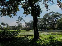 "Yangon: le parc Kandawgyi, où nous avons fait notre sieste <a style=""margin-left:10px; font-size:0.8em;"" href=""http://www.flickr.com/photos/127723101@N04/23429504351/"" target=""_blank"">@flickr</a>"