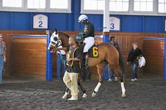 2015-12-13 (24) r2 Caitlyn Stoddard on #6 Janealee (JLeeFleenor) Tags: photos photography md marylandracing marylandhorseracing laurelpark horses thoroughbreds equine equestrian cheval cavalo cavallo cavall caballo pferd paard perd hevonen hest hestur cal kon konj beygir capall ceffyl cuddy yarraman faras alogo soos kuda uma pfeerd koin حصان кон 马 häst άλογο סוס घोड़ा 馬 koń лошадь paddock bay maryland