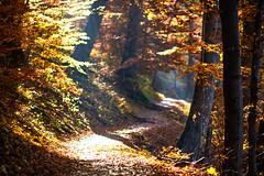 20151106_135900_Romania_7500958 1.jpg (Reeve Jolliffe) Tags: world nikon romania d750 nikkor 135mm ffl primelens southeasterneurope defocuscontrol fixedfocallength 135dc 13520dc 135mmf20dafdc