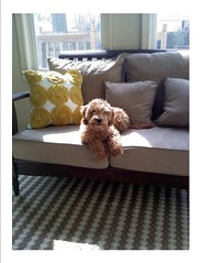 mollie-catching-some-rays-in-the-sunroom--shes-one-of-cupcake-and-chewys-girls-_4461480690_o