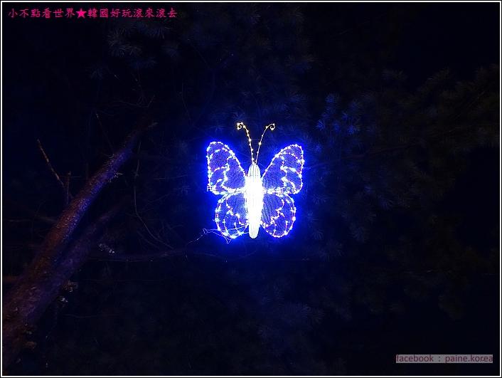 晨靜樹木園 五色星光庭園展 (17).JPG