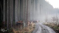 December Fog (judithrouge) Tags: wood mist fog forest way nebel mud wald weg matsch