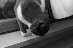 Soprammobili pelosi   :)) (carlo612001) Tags: joy gatto gatta micio micia cat zeiss carlo612001 peloso pelosa pelosi pelo soprammobile soprammobili hairy hair ornament flickr