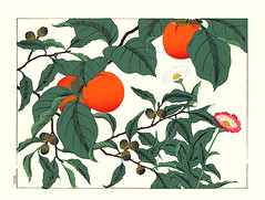 Japanese persimmon, oak and common zinnia (Japanese Flower and Bird Art) Tags: flower persimmon diospyros kaki ebenaceae oak quercus fagaceae common zinnia elegans asteraceae hoitsu sakai kiitsu suzuki kimei nakano nihonga woodblock picture book japan japanese art readercollection
