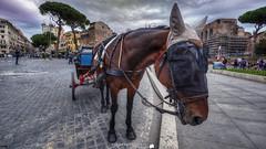 Horse in Rome (Francesco Grisolia) Tags: horseinrome horse rome roma cavallo cavalloaroma primopiano portrait ritratto animale nature natura nikon d750