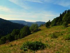 SPTSOMMERTAG IM HERBST (ehbub@yahoo.de) Tags: schwarzwald herbst sptsommertag wiese nadelbaum laubbaum gebsch