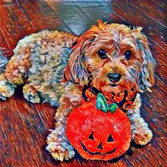 Caturday Art #13 (yourdesignerdog) Tags: ifttt wordpress all posts sadie art blog digital halloween jackolantern pet portrait