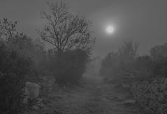 7.11.16 100 (Jeaunse23) Tags: mist fog france ardeche autumn gr ricohgrd grd