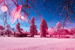 Prink the Pink (jrseikaly) Tags: infrared ir pink nature trees montreal canada sky landscape jack seikaly jrseikaly photography canon t5