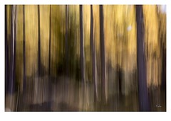 frie automnale - 2016 - 5545 (thierry lathoud) Tags: tala lathoudthierry canon creativeart couleurs art artcreative abstrait abstract nature paysage flou fil forest foret fort icm