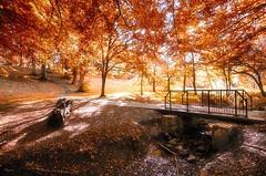 Backhouse Park (wayman72) Tags: backhouse sunderland nikon wide tokina trees beautiful light sun sunshine shine water leaves glimmer