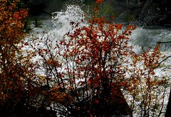 Autumn Enchantments (Pictoscribe) Tags: pictoscribe fall autumn leaves colors red light surface tension