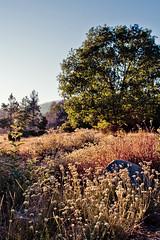 Cuyamaca Rancho SP (shimonkey) Tags: yellow cuyamaca rancho california sandiego park nature landscape