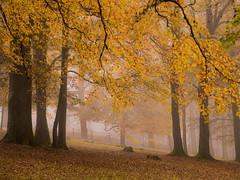 autumn meets fog (schasa68) Tags: austria upperaustria sterreich obersterreich o linz pstlingberg herbst autumn park nebel fog nebelstimmung baum pflanze outdoor laub bltter