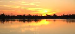Les flammes du flamand (Dominique Dumont Willette) Tags: flamandsroses silhouettes arbres vgtation reflets eau tang marais rose jaune ciel nuages soleilcouchant coucherdesoleil camargue paca lessaintesmariesdelamer