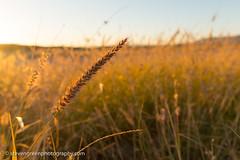 Sunrise in Presidio Texas (Steven Green Photography) Tags: presidio texas dry grass morning nature outdoor photography southwesttexas sunrise