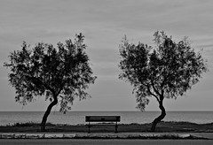 Malinconia (marcus.greco) Tags: nature trees black white