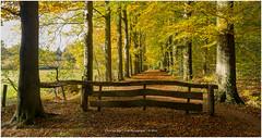Autumn Forrest, Netherlands (CvK Photography) Tags: autumn autumncolors canon color cvk europe fall forrest landscape nature netherlands overijssel twente path enschede nederland nl