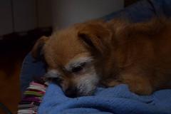 Nuca (Hachimaki123) Tags: animal perro dog nuca