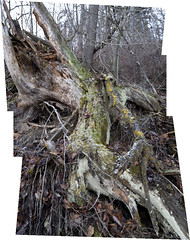 Forest Decay (Joseph Austin) Tags: forest decay photomerge afnikkor35mm12d urbanforest