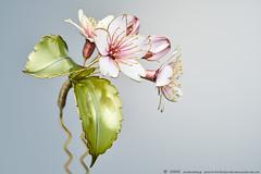 2016    Cherry Blossom 02 ( sakae) Tags:     cherry blossom    kanzashi hair pin ornaments        kimono  sakae       resin time out cnn     chromavision interbee2015
