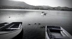 Un agradable paseo (Isabel Aguado Rodrguez) Tags: sony dschx300 estanque lago estany girona banyoles barcas remo agua horizonte sonydschx300