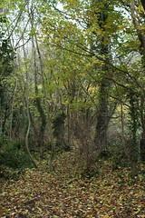 IMG_8877 (Geoff_B) Tags: badockswood bristol walkinthewoods autumn november unprocessed unedited