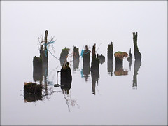 The Old Pier (McRusty) Tags: old pier post posts dores loch ness misty flat calm day reflection spooky great glen rope grass wood highland scotland