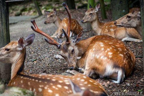 Daniele w parku. Nara