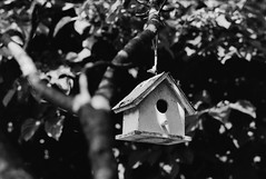 Garden (th.bellucci) Tags: film monochrome garden nikon kodak trix f80