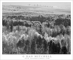 Aspen Forest and Hills (G Dan Mitchell) Tags: autumn trees light blackandwhite fall nature monochrome season landscape afternoon conway nevada crest sierra hills summit aspen eastern groves ascend slopes