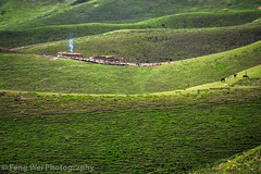Summer Landscape @ Qiongkushitai Village, Xinjiang China (Feng Wei Photography) Tags: china travel color beautiful horizontal rural cn landscape countryside scenery asia outdoor tian scenic xinjiang remote shan kazakh yili tianshan qiongkushitai