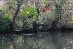 Boat (kunstmacher) Tags: autumn color fall rio yellow river germany deutschland herbst ducks amarillo gelb pato alemania otoño enten fluss tuebingen neckar rubberducks entenrennen tübingen tubinga carreradepatos gummieenten
