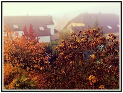 Warm me up on those chilly autumn days /// [Explore] (heinrich_511) Tags: trees winter sun mist fog warm warmth days iphone coldness