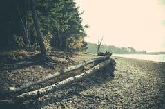 Kallahti (timoppi) Tags: nature finland helsinki outdoor balticsea syksy vuosaari kallahti ulkoilu