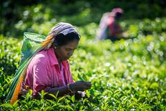 Tea time (Channed) Tags: portrait people woman lady asia plantation srilanka ceylon portret teaplantation azi plantage nuwaraeliya teapicker littleengland serendib teapicking theeplantage teaplucker pussellawa tealeafpicker pussallawa theeplukken theeplukker theeplukster chantalnederstigt