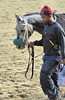 2015-11-11 (67) r6 #15 More Stormyweather (JLeeFleenor) Tags: photos photography md marylandracing marylandhorseracing laurelpark horses thoroughbreds equine equestrian cheval cavalo cavallo cavall caballo pferd paard perd hevonen hest hestur cal kon konj beygir capall ceffyl cuddy yarraman faras alogo soos kuda uma pfeerd koin حصان кон 马 häst άλογο סוס घोड़ा 馬 koń лошадь grey gray maryland