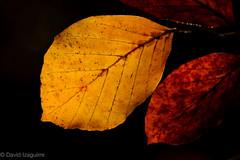 Otoño (Tabernilla (David Izaguirre)) Tags: españa david macro nikon europa bosque otoño 90mm cantabria d610 ucieda tamrom davidizaguirre tabernilla
