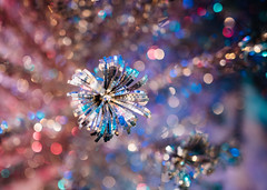 evergleam (almostsummersky) Tags: christmas pink blue winter holiday metal wisconsin silver lights us aluminum branch unitedstates bokeh decoration indoor christmastree madison reflective evergleam wisconsinhistoricalmuseum