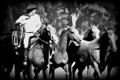 Retrato en blanco y negro (Eduardo Amorim) Tags: horses horse southamerica argentina criollo caballo cheval caballos cavalos pferde herd cavalli cavallo cavalo gauchos pferd ayacucho chevaux gaucho cavall  amricadosul gacho amriquedusud provinciadebuenosaires  gachos  sudamrica suramrica amricadelsur sdamerika crioulo caballoscriollos criollos  tropillas buenosairesprovince americadelsud tropilhas tropilla crioulos cavalocrioulo americameridionale tropilha caballocriollo eduardoamorim cavaloscrioulos