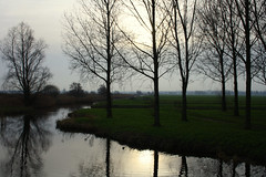 Hitland, January 1st, 2016 (onno de wit) Tags: trees netherlands nederland meadows peat swans zuidholland capelleadijssel hitland zwanen oldmills nieuwerkerkadijssel weilanden laagveen