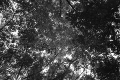 trees (inadan15) Tags: film 35mm photography nikon ilfordxp2 ilford analogphotography 35mmphotography filmphotography homedeveloping nikonl35af2