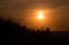 Sundown In Chatham. (SueZinVT) Tags: chatham hardingsbeach capecod canon70d sunset silhouettes suezamecnik grass sky orange orangesky sun shore