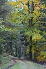 strom u cesty (Jaromr Soukup) Tags: podzim autumn tree strom cesta