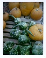 gourds (EllenJo) Tags: polaridweek october2016 polaroid instantfilm ellenjo ellenjoroberts gourd gourds pumpkinpatch cottonwoodaz colorpack3 fujifp100c