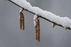ckuchem-8081 (christine_kuchem) Tags: asthaufen baumstamm eis forst frost haufen holz staatsforst stmme tiere unterschlupf wald wasser wildnis winter winterschlaf winterwald gefroren gewsser kalt naturnah reif schnee wild ste